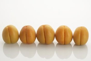 Apricots are classified in the Prunus genus.