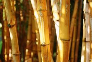 Bamboo can be found in combinations of green, yellow and black.