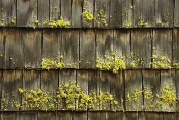 Moss can shorten the lifespan of wooden shingles.