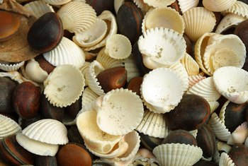 Make seashell balls with the shells you gathered at the beach.
