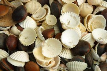 Seashells can be wired or glued onto chandeliers for a shabby chic look.