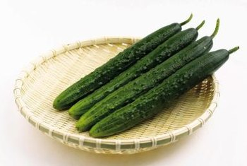 Many new varieties of cucumbers are hybrids.