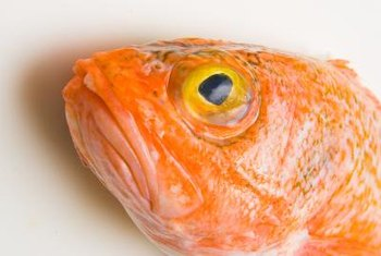 Orange roughy can live for as long as 149 years, which is a long time to accumulate mercury.