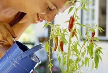 Pepper plants grow well in the ground or in containers.