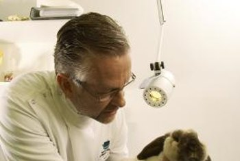 Most veterinarians work in private practice, caring for pets.