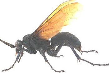 Wasps are less active at night, making it easier to remove them.