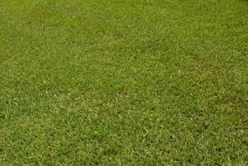 An enviable lawn requires the right seed in the right place.