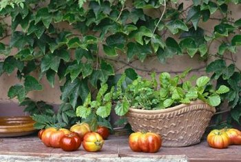 Homegrown tomatoes may become seriously infested with wormlike pests.