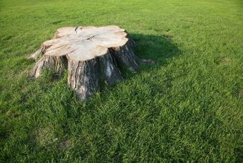 Use stump grindings as mulch in your landscape.