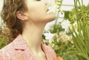 Deadheading freesias extends the blooming period so you can enjoy more of the fragrant flowers.