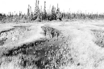 Much peat moss used in gardens is mined from ancient Canadian sphagnum bogs.