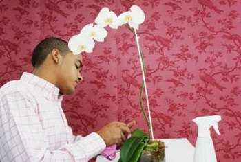 Check orchids often for chewing pests.