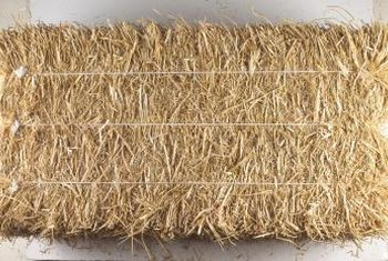 Gardeners use small, rectangular hay bales for growing vegetables.