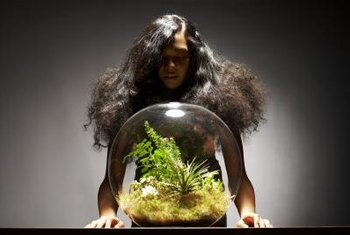 Most plants used in terrariums reach a mature height of less than 12 inches.