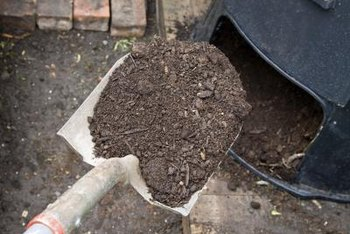 Composted manure has fewer pathogens that could affect the safety of the vegetables you grow.