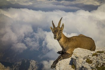 The Capricorn's true goal is to rule all he surveys.