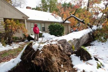 Your insurer won't pay if the tree doesn't hit a structure.