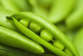 Fresh peas from a home garden are easier to pick when grown on a pole.