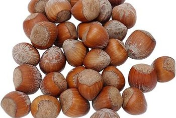 Edible filbert nuts appear in clusters all over the native California hazelnut each fall.