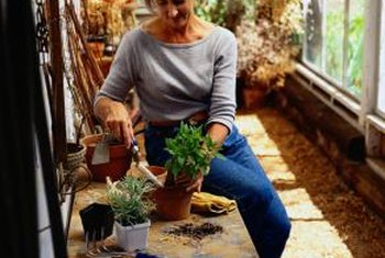 You can use easy home remedies for houseplant fungus.