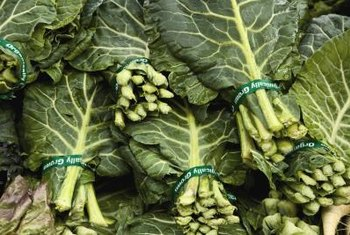 Stewed collard greens are commonly served at breakfast in East Africa.