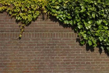 Non-chemical approaches work best for ivy removal from brick.