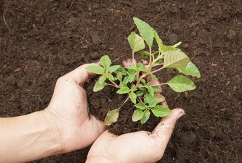 Loamy soil has air and water pockets that help seeds to germinate.