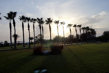 How to Apply Epsom Salts to Palm Trees
