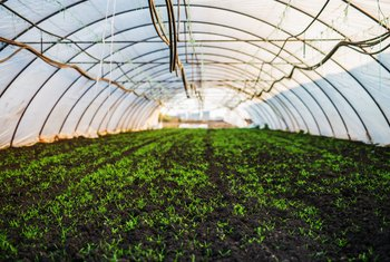 How to Use Greenhouses to Grow Plants From Seeds