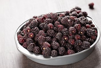 The Health Benefits of Boysenberry