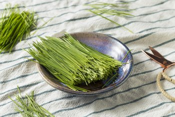 How to Store Wheatgrass Powder