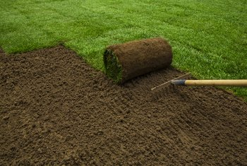 What to Cover New Grass Seed With