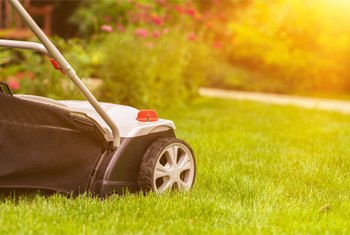 When Do You Mow Newly Seeded Grass?