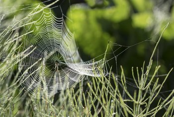 What Can You Spray in Your Yard to Get Rid of Spiders?