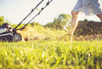 What Kind of Gas Do Lawn Mowers Use?