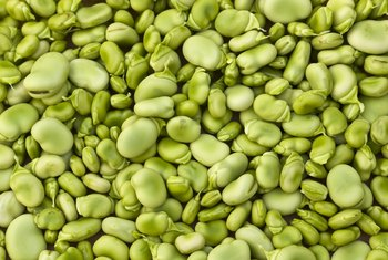 How to Grow a Lima Bean in a Bag