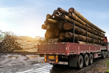 The Difference Between Pine & Fir Lumber