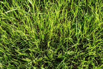 How to Cut Overgrown Lawns