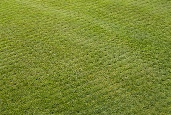 Should You Rake Your Lawn After it Has Been Aerated?