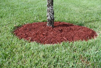 How to Suppress Grass With Mulch