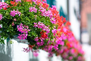The Best Cures for Caterpillars Eating Your Geraniums
