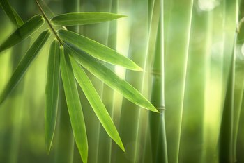 How to Revive a Bamboo Plant