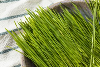 How Much Protein Does Wheatgrass Have?