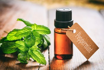 Ratio of Peppermint Oil to Water for Repelling Mice