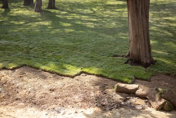 Do You Have to Roll Over New Sod?