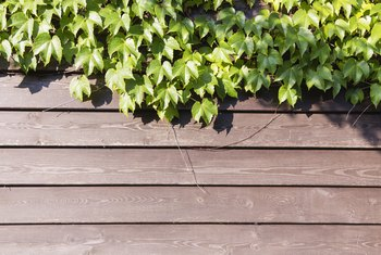 What Can You Use to Kill Vines That Grow on Your Fence?