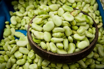 The Best Time to Plant Fava Beans