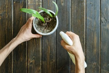 How to Use Vinegar to Get Rid of Fungus Gnats on a House Plant