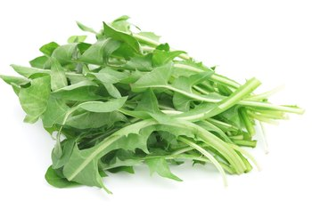 Can You Eat Dandelion Greens Raw?