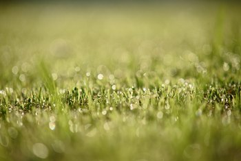 How to Pre-Germinate Grass Seed